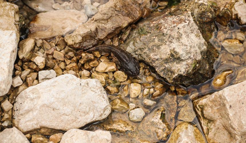 Tote Fische im ausgetrockneten Flussbett © Viktor Bjelic
