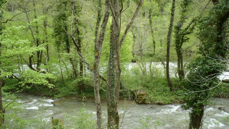 The river Vrbas in the area of the planned dam. © Pippa Gallop