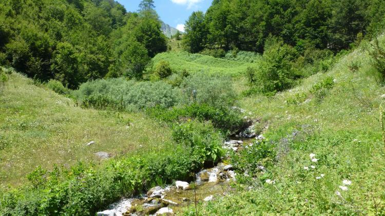 Der Mavrovo-Nationalpark in Nordmazedonien ist ein Hotspot der Artenvielfalt. Wasserkraftprojekte bedrohen die Artenvielfalt. © Theresa Schiller