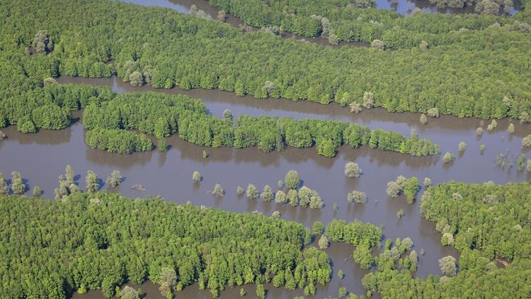 Die Save-Auen bieten ein einzigartiges Potenzial für natürlichen Hochwasserschutz © Goran Šafarek