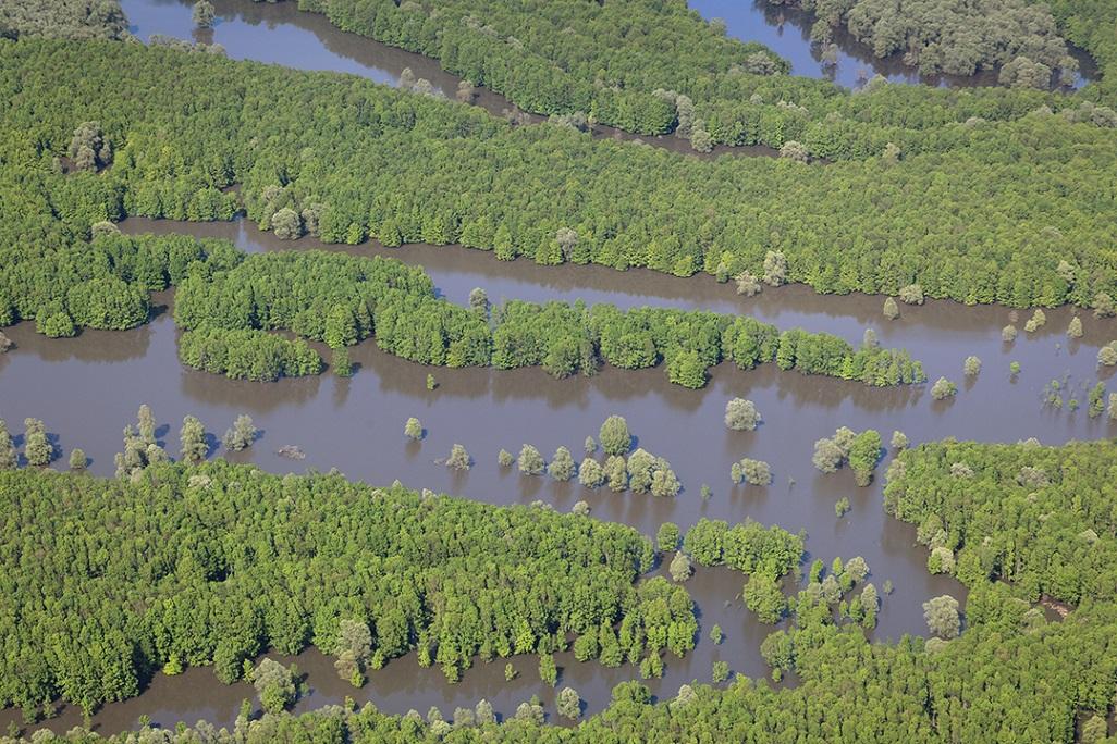 The floodplains of the Sava offer a unique potential for natural flood retention. © Goran Šafarek