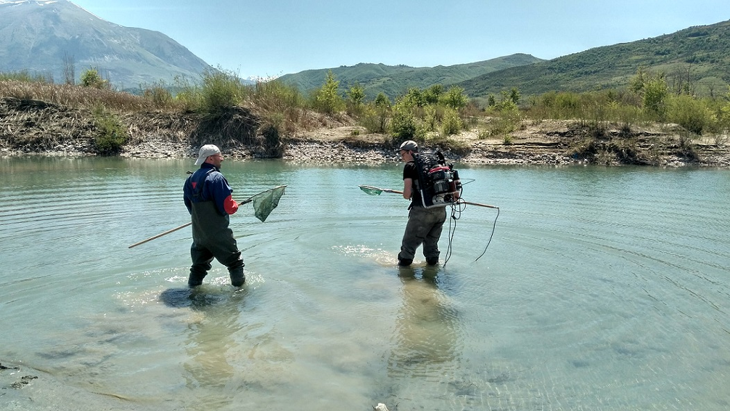 Scientists at work, here while electrofishing. Paul Meulenbroek/BOKU (right) and Sajmir Beqiraj/Uni Tirana. © Cornelia Wieser
